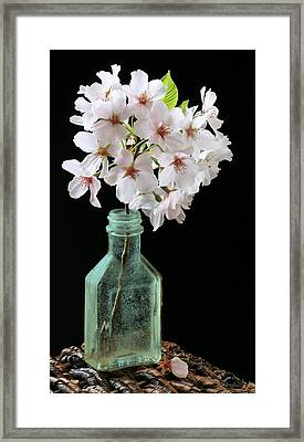 Cherry Green Framed Print by JC Findley