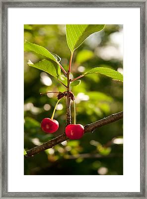 Cherry Framed Print by Sasha Gurkova
