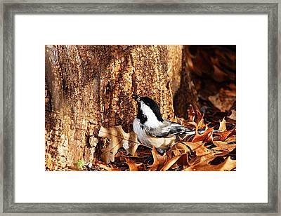 Chickadee With Sunflower Seed Framed Print by Larry Ricker