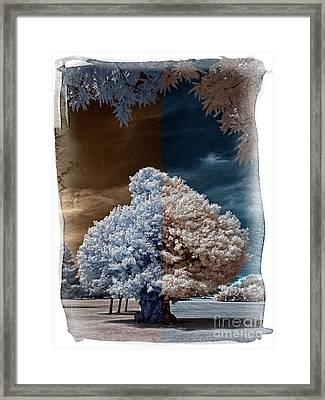 Childhood Oak Tree - Infrared Photography Framed Print by Steven Cragg