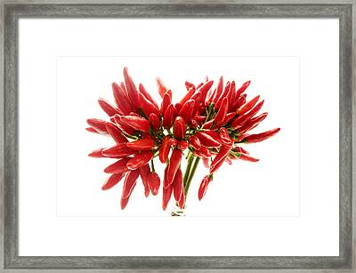 Chili Peppers Framed Print by Fabrizio Troiani