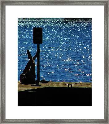 Chillin Framed Print by Todd Sherlock