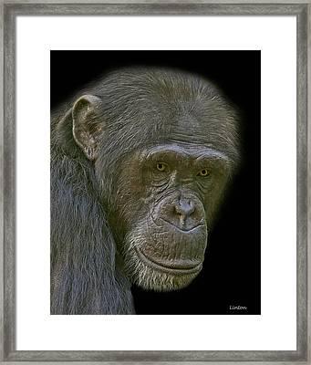 Chimpanzee Portrait Framed Print by Larry Linton