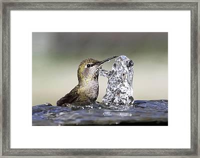 Chin Tickler Framed Print by Angie Vogel