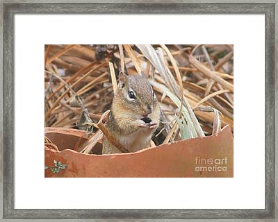 Chipmunks Are So Cute Framed Print by Robert E Alter Reflections of Infinity LLC