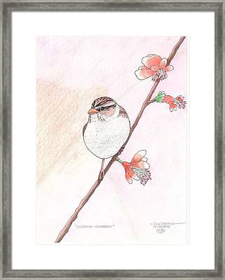 Chipping Sparrow Framed Print by William Deering