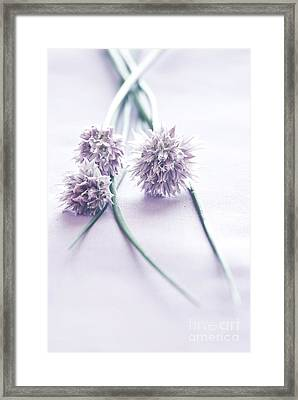 Chives Framed Print by HD Connelly