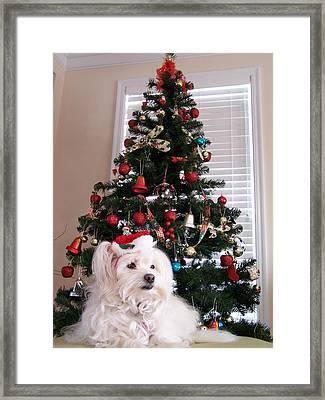 Christmas Card Dog Framed Print by Vijay Sharon Govender
