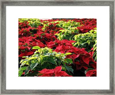 Christmas Color Framed Print by FeVa  Fotos