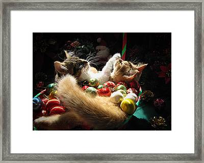 Christmas Season W Two Kittens In Love - Kitty Cat Angels W Heads Up Nestled In A Basket Of Baubles Framed Print by Chantal PhotoPix