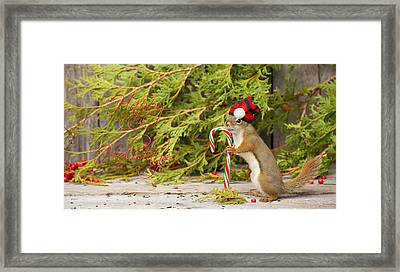 Christmas Squirrel. Framed Print by Kelly Nelson