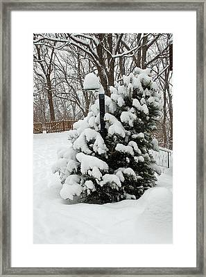 Christmas Tree Framed Print by Aimee L Maher Photography and Art Visit ALMGallerydotcom