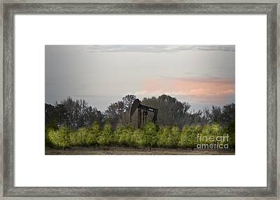 Christmas Tree Farm Framed Print by Kim Henderson