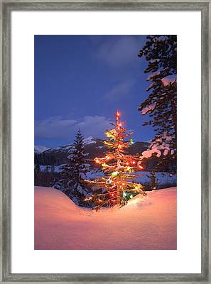 Christmas Tree Outdoors At Night Framed Print by Carson Ganci