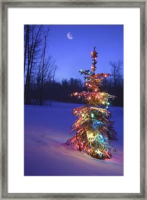 Christmas Tree Outdoors Under Moonlight Framed Print by Carson Ganci
