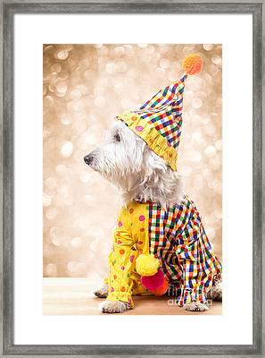 Circus Clown Dog Framed Print by Edward Fielding