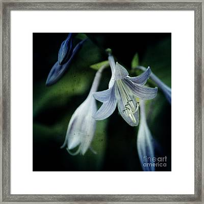Cladis 02s Framed Print by Variance Collections
