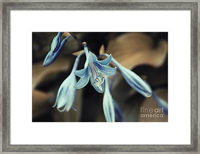 Cladis 22 Framed Print by Variance Collections
