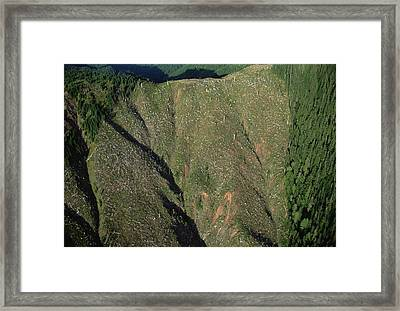 Clear Cutting, Olympic National Park Framed Print by Mark Moffett