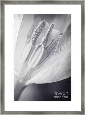 Clear Framed Print by Priska Wettstein