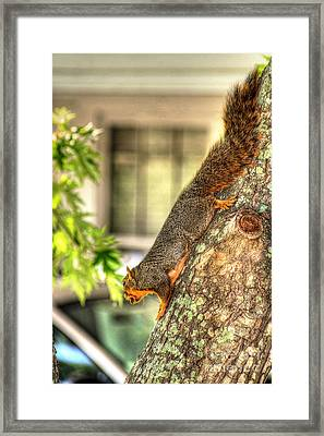 Climbing Down Framed Print by Ester  Rogers