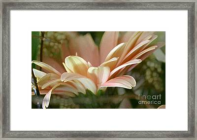 Close-uo View Framed Print by Cecilia Blignaut