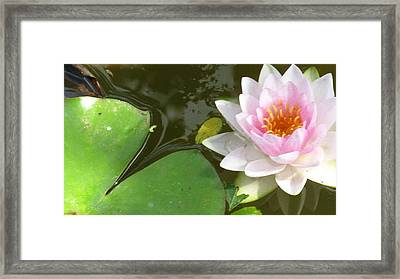 Close-up Lily Framed Print by Debbie Finley