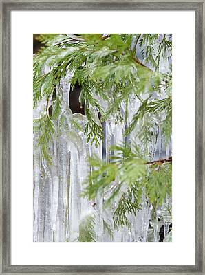 Close-up Of Ice Covered Tree Branch Framed Print by James Forte