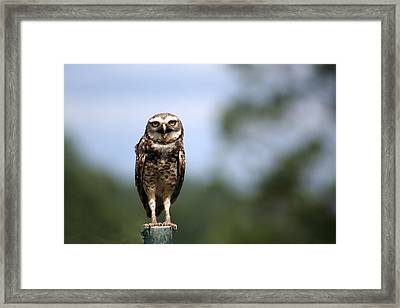 Close Up Of Owl Framed Print by Adriana Casellato