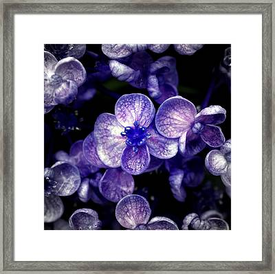 Close Up Of Purple Flowers Framed Print by Sner3jp