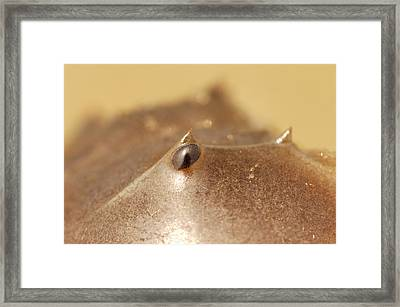 Close Up Of The Multi-faceted, Compound Framed Print by Darlyne A. Murawski