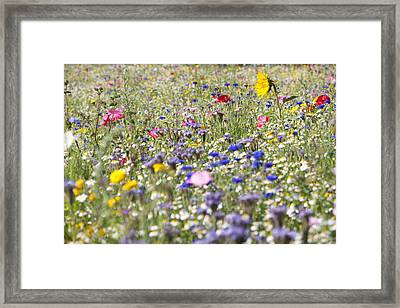 Close Up Of Vibrant Wildflowers In Sunny Field Framed Print by Echo