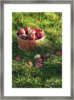 Closeup Of Freshly Picked Apples  Framed Print by Sandra Cunningham