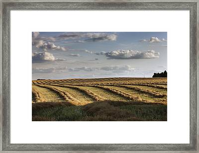 Clouds Over Canola Field On Farm Framed Print by Dan Jurak