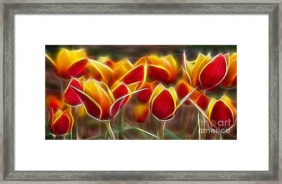 Cluisiana Tulips Fractal Framed Print by Peter Piatt