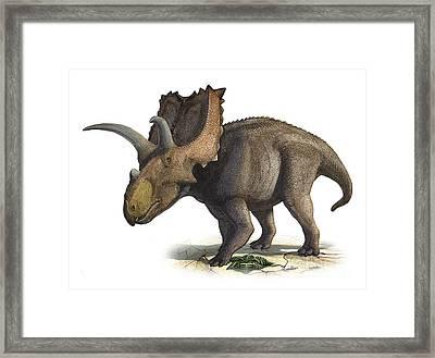 Coahuilaceratops Magnacuerna Framed Print by Sergey Krasovskiy
