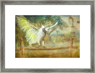 Cockatoo Dreaming Framed Print by Trudi Simmonds