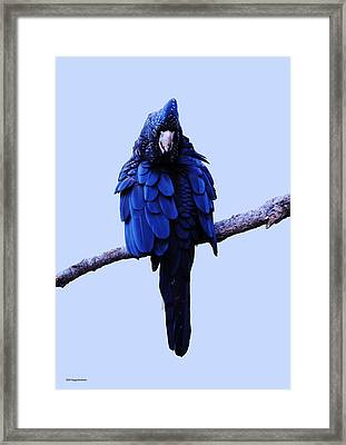 Cockatoo I Framed Print by DiDi Higginbotham