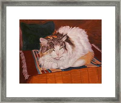 Cody Is Just Chillin Framed Print by Shawn Shea