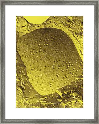 Col. Freeze-fracture Tem Of Cell Nucleus Membrane Framed Print by Dr Kari Lounatmaa