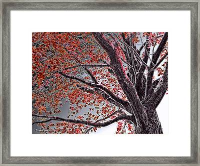Cold Autumn Framed Print by Stephen Younts