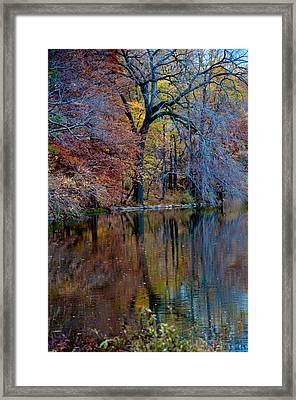 Color Fall Framed Print by Martin Goldberg