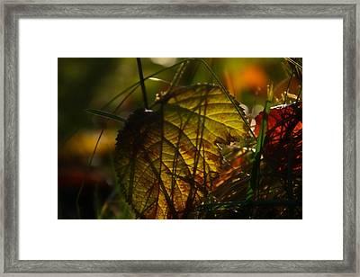 Color Jungle Framed Print by Odd Jeppesen