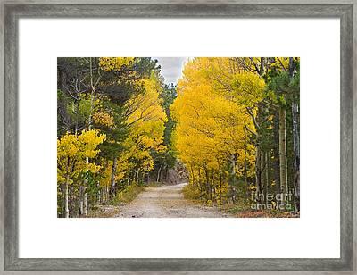 Colorado Autumn Aspen Road Boulder County Framed Print by James BO  Insogna