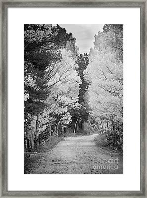 Colorado Rocky Mountain Aspen Road Portrait Bw Framed Print by James BO  Insogna