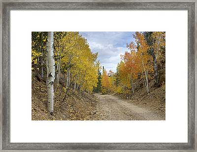 Colorado Rocky Mountain Colorful Autumn Back Road Framed Print by James BO  Insogna
