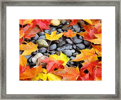 Colorful Autumn Leaves Prints Rocks Framed Print by Baslee Troutman
