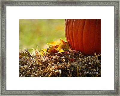 Colorful Autumn Framed Print by Nava Thompson