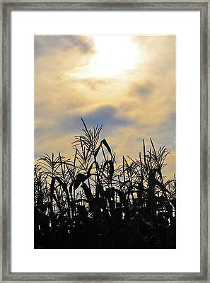 Colorful Clouds Over A Cornfield Framed Print by Bill Cannon