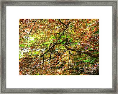 Colorful Maple Leaves Framed Print by Carol Groenen